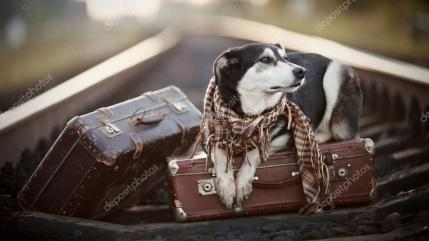 depositphotos_57890421-stock-photo-the-dog-lies-on-suitcases
