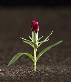 11AAsproutingplant
