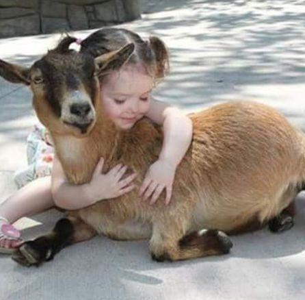 32cd484e72111f0f5fc45f9977ba2005--kids-animals-farm-animals