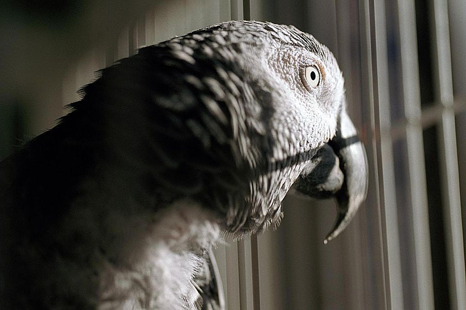 bird-depression-200522380-001-resized-58a471fc5f9b58819c84bdfb
