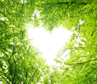 blog_iStock_20999523_trees-heart_-IngaNielsen