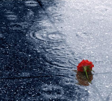 dropped_in_the_rain_by_humminggirl.jpg